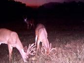 deerm