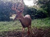 deerp10