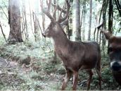 deerp8
