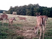 deerx